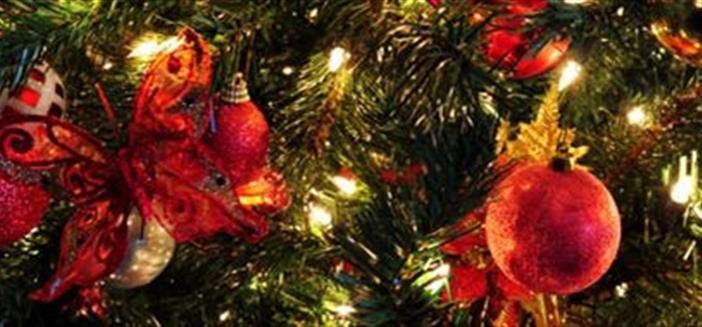 """""""1000 pinheiros de natal"""" para evitar corte indiscriminado de árvores"""