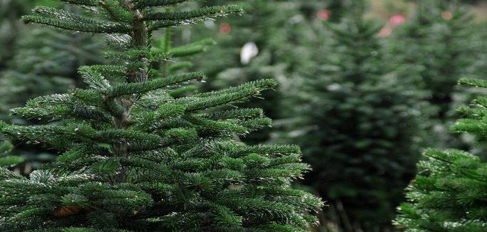 Natal no parque arranca sábado com entrada gratuita
