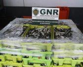 GNR – Atividade operacional semanal
