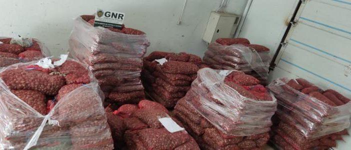 GNR – Apreensão de oito mil quilos de amêijoa-japonesa imatura