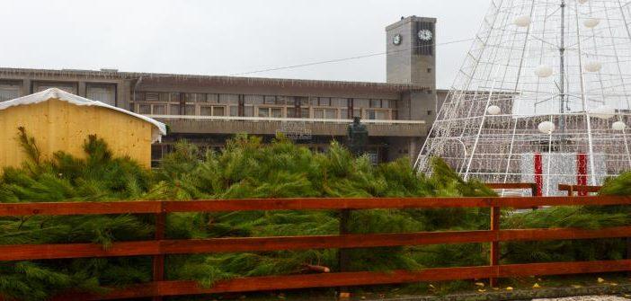 Câmara oferece pinheiros de Natal